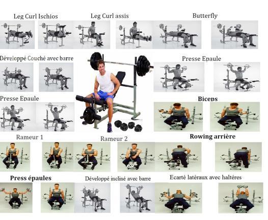 exercice avec banc de musculation